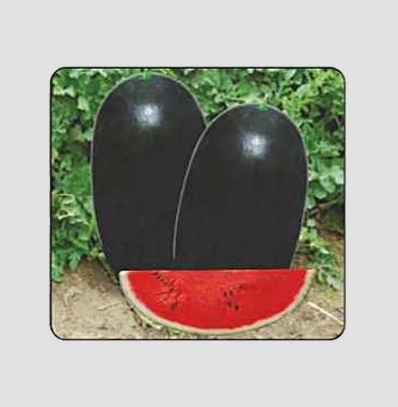 F1 Kalia Plus Watermelon Seeds