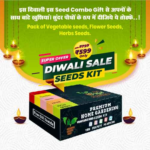 20 in 1 Vegetable Seeds Kit For kitchen and Terrace Garden
