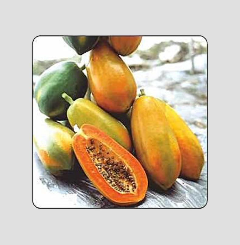 F1 Singham (Imported) Papaya Seeds