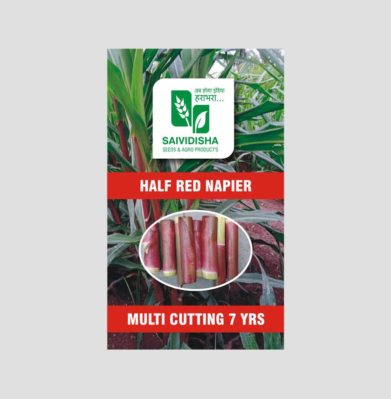 Bangla Half Red Super Napier stick