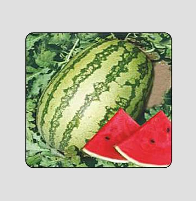 F1 Mahima Watermelon Seeds